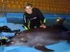 Дайвинг с дельфинами в Харькове