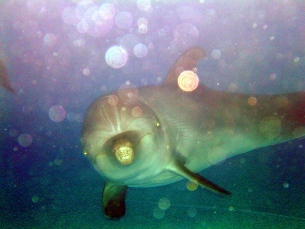 Фото дельфина